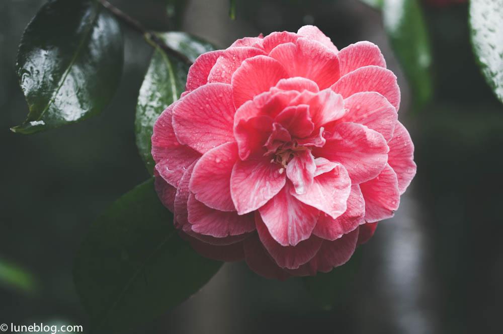 nitobe japanese garden vancouver ubc lune blog (7 of 18).jpg