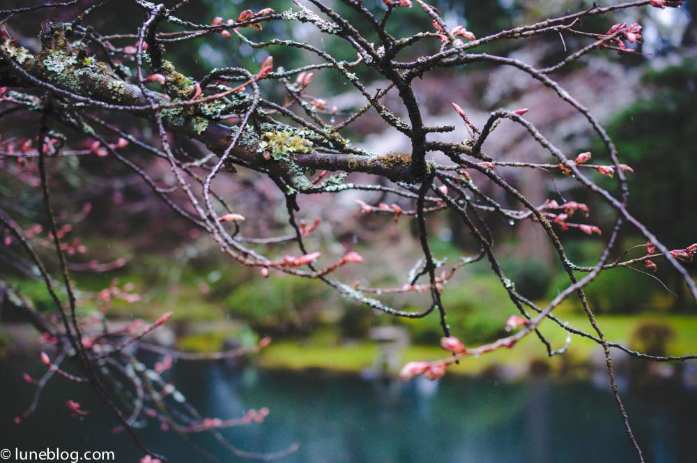 nitobe japanese garden vancouver ubc lune blog (10 of 18).jpg