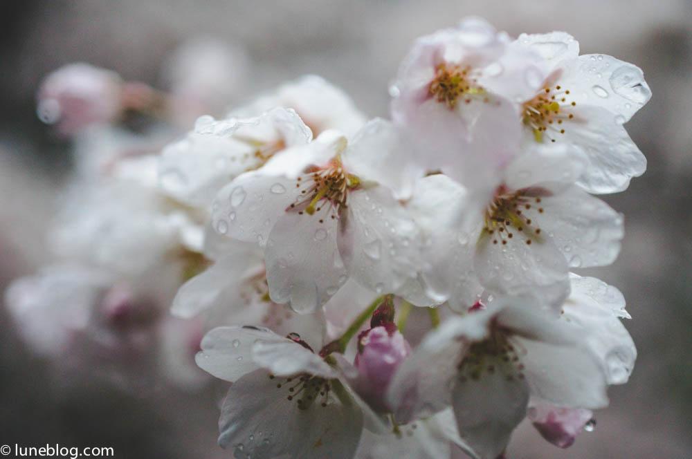 nitobe japanese garden vancouver ubc lune blog (18 of 18).jpg