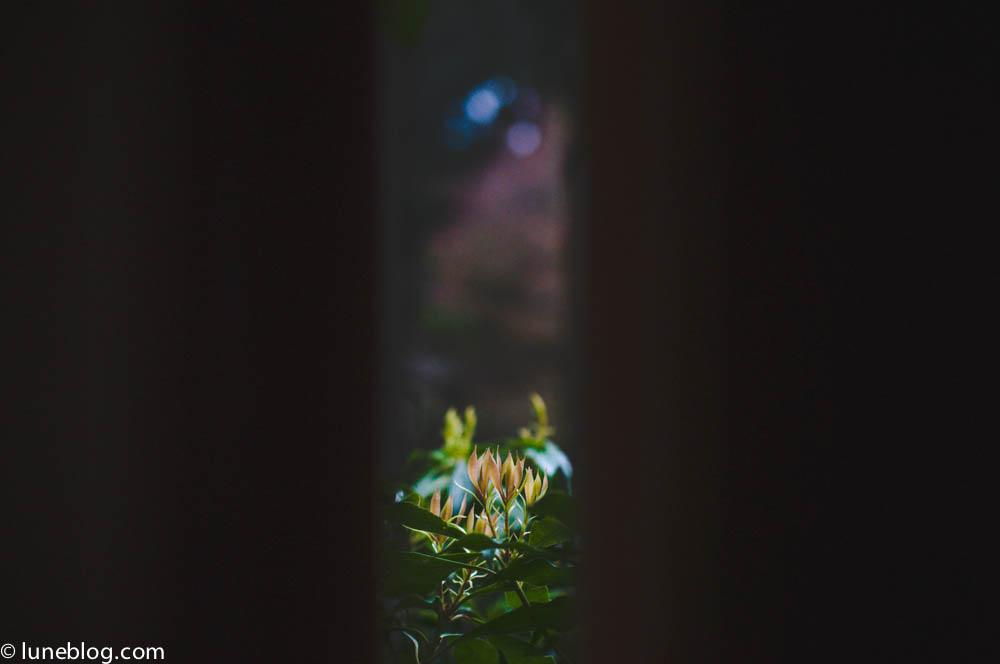 nitobe japanese garden vancouver ubc lune blog (13 of 18).jpg