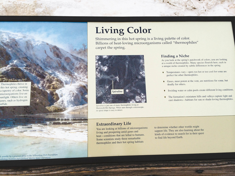 mammoth hotsprings lune idyll guide blog yellowstone (1 of 5).jpg