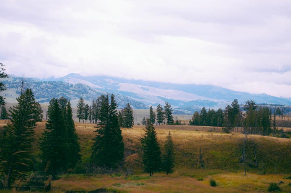 montana lune idyll guide blog yellowstone (8 of 121).jpg