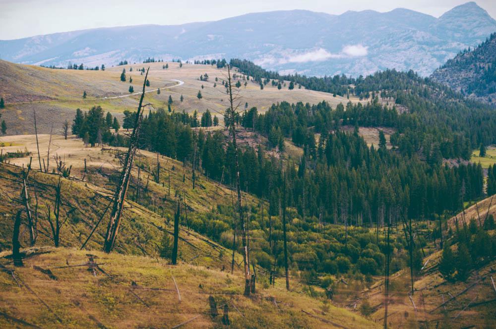 montana lune idyll guide blog yellowstone (9 of 121).jpg