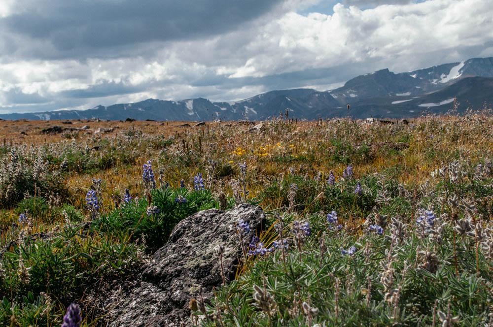 montana lune idyll guide blog yellowstone (114 of 121).jpg
