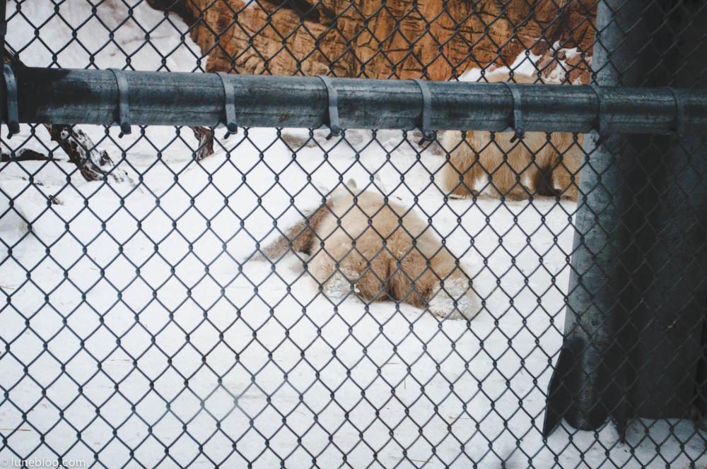 journey to churchill polar bears lune blog (17 of 25).jpg