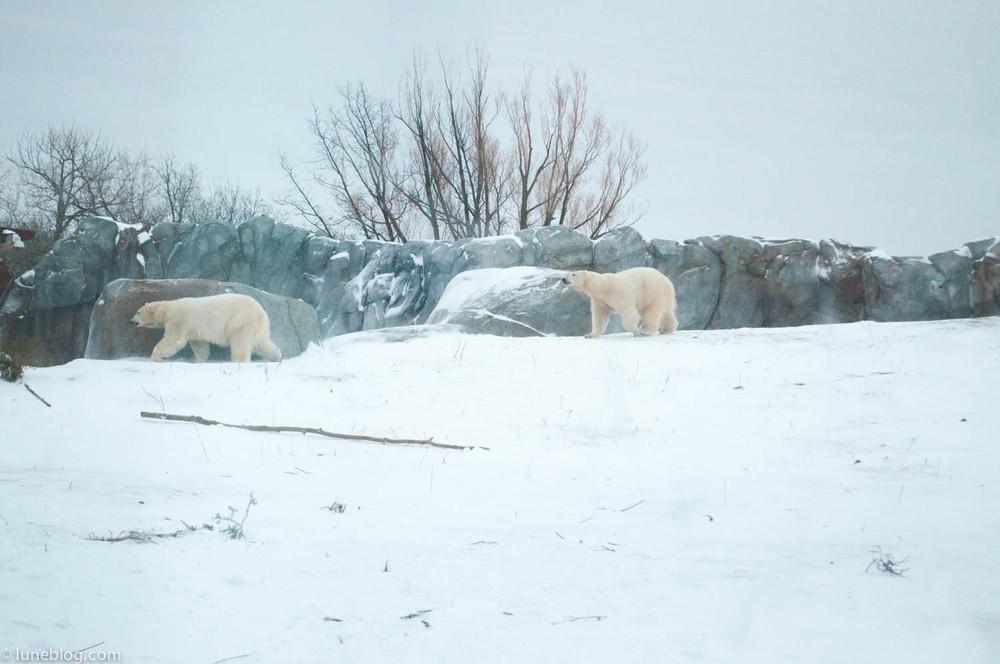 journey to churchill polar bears lune blog (22 of 25).jpg