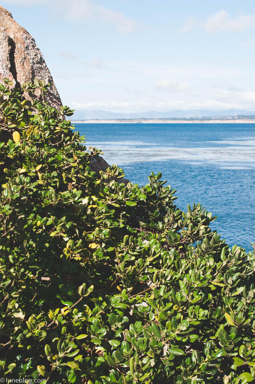 pacific grove carmel (97 of 138).jpg