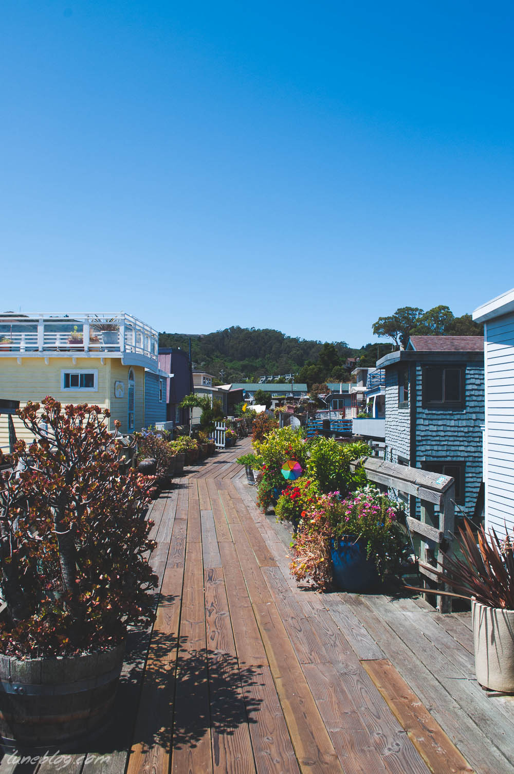 houseboats of sausalito sanfransisco lune travels blog (12 of 31).jpg