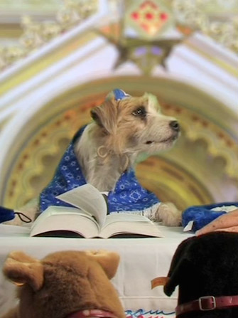 "Click photo to download. Caption: ""Elvis"" Best performs his ""arf-tara"" at a bark mitzvah in 2008. Credit: Molly Kravitz."