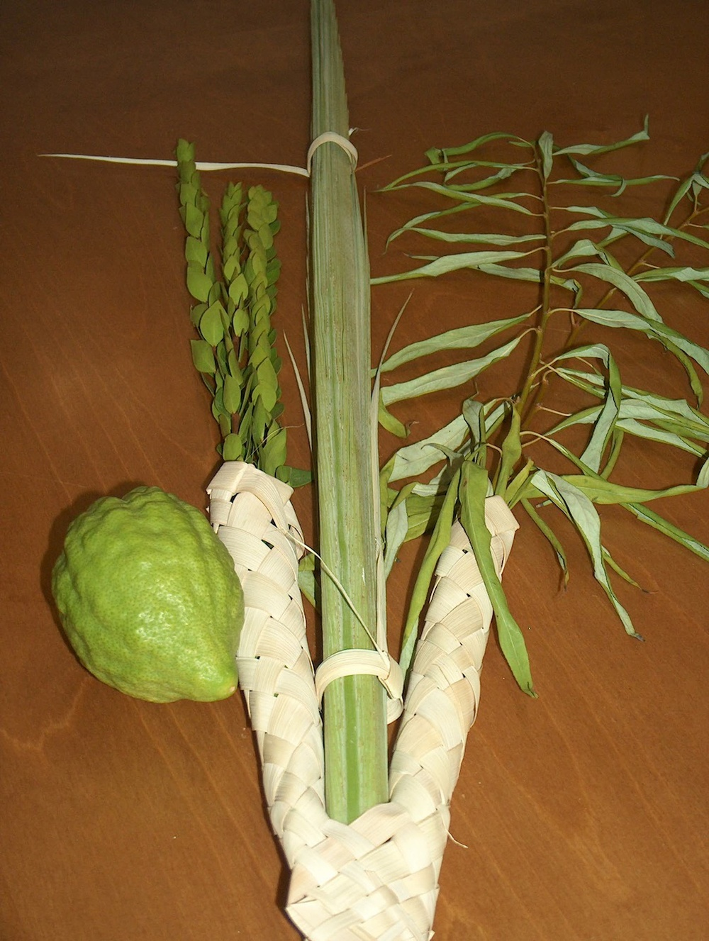 Click photo to download. Caption: The Four Species, from left to right—etrog, hadassim, lulav, aravot. Credit: Wikimedia Commons.