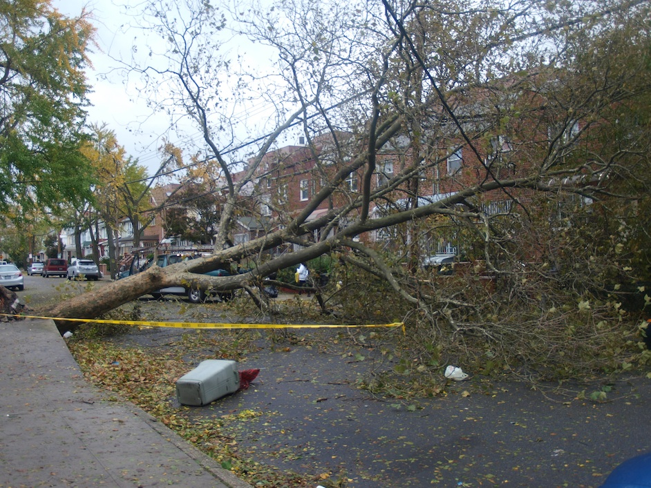 Click photo to download. Caption: A tree downed on East 21st St. in Brooklyn on Oct. 30, due to Hurricane Sandy. Credit: Vicpeters/Wikimedia Commons.