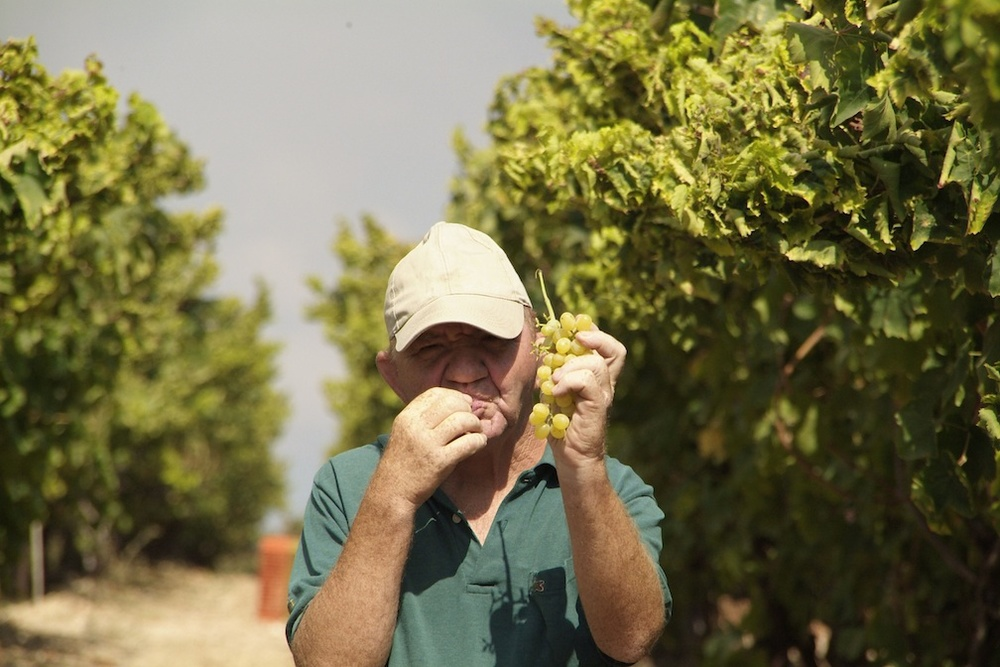 Click photo to download. Caption: Tulip Winery worker Nathan Can'ani. Credit: Courtesy Tulip Winery.