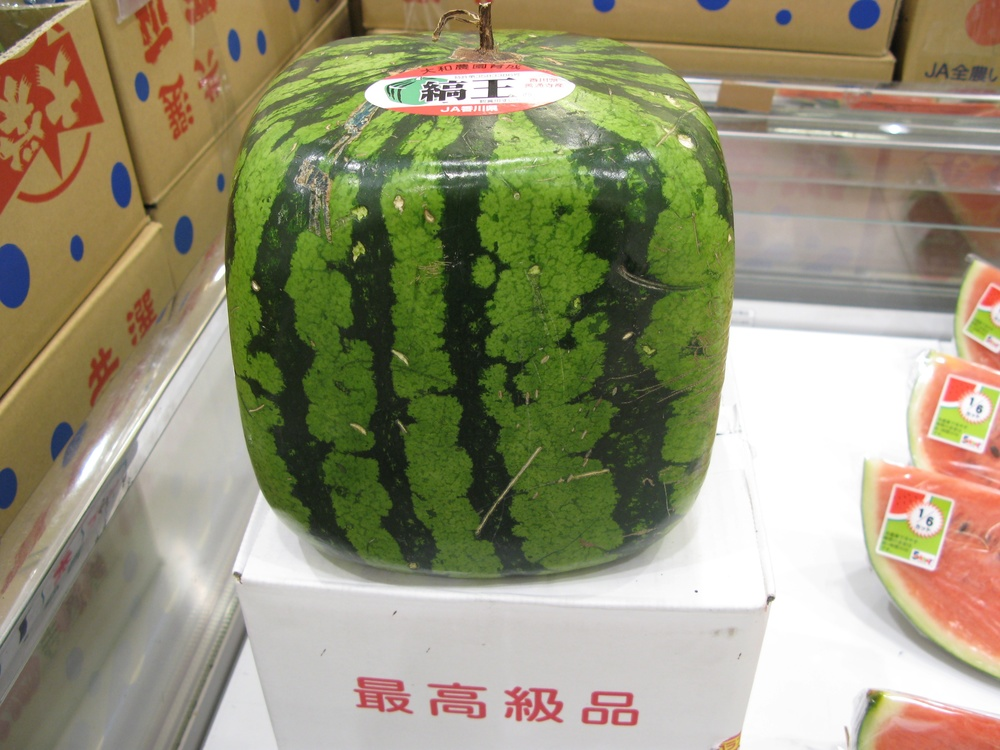 Click photo to download. Caption: The squared watermelon. Credit: Cat via Wikimedia Commons.