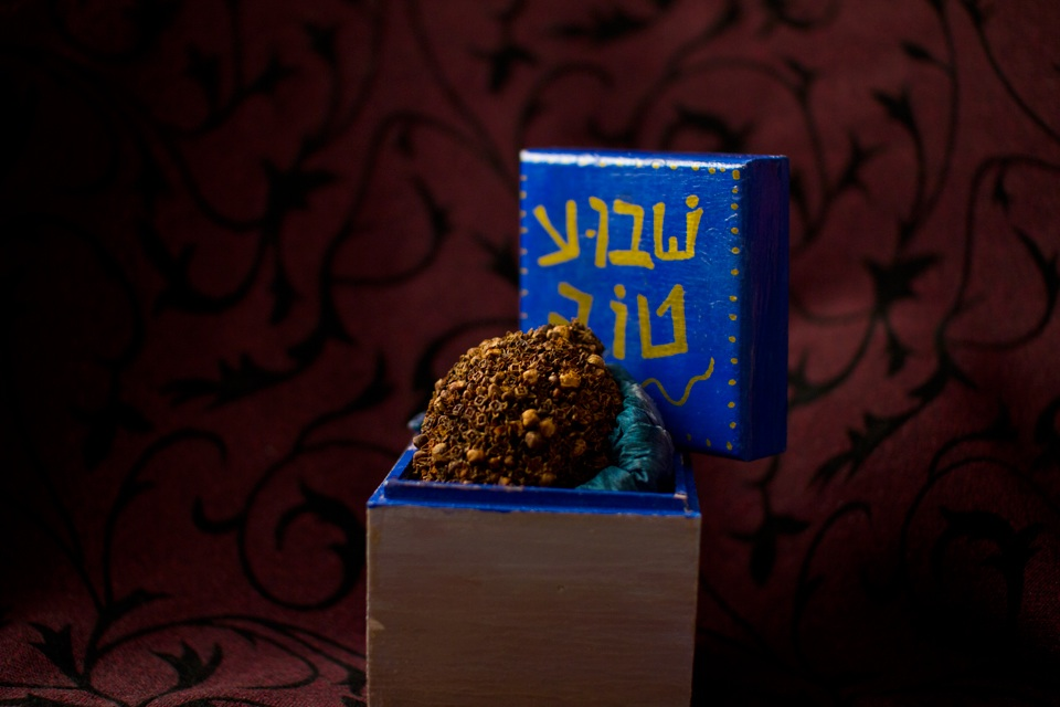 Click photo to download. Caption: Repurposing the etrog as b'samim (spices) for havdalah. Credit: David Komer for Shivimpanim.org.