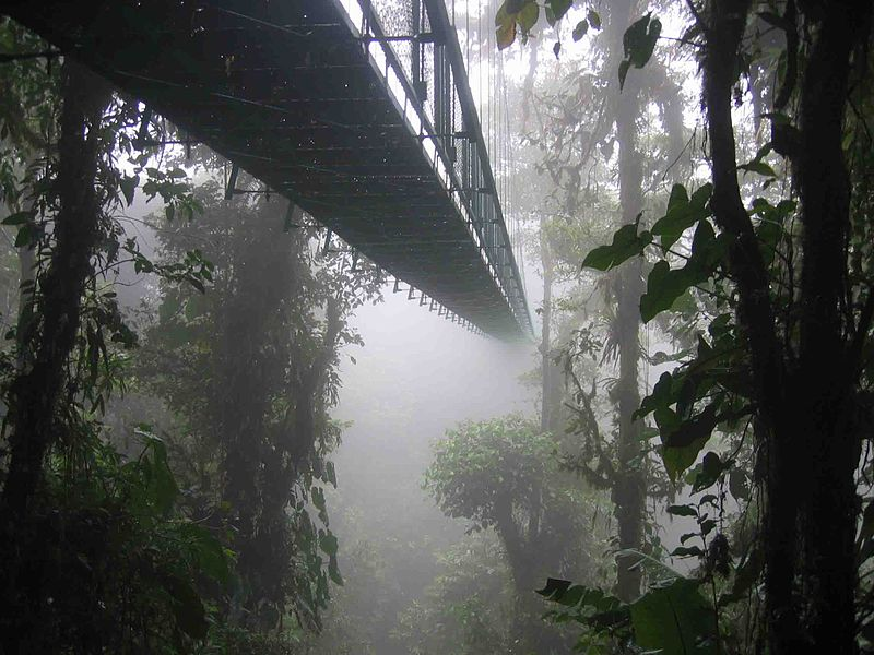 Click photo to download. Caption: The Santa Elena Skywalk through the Costa Rican rainforest. Credit: Dirk van der Made.