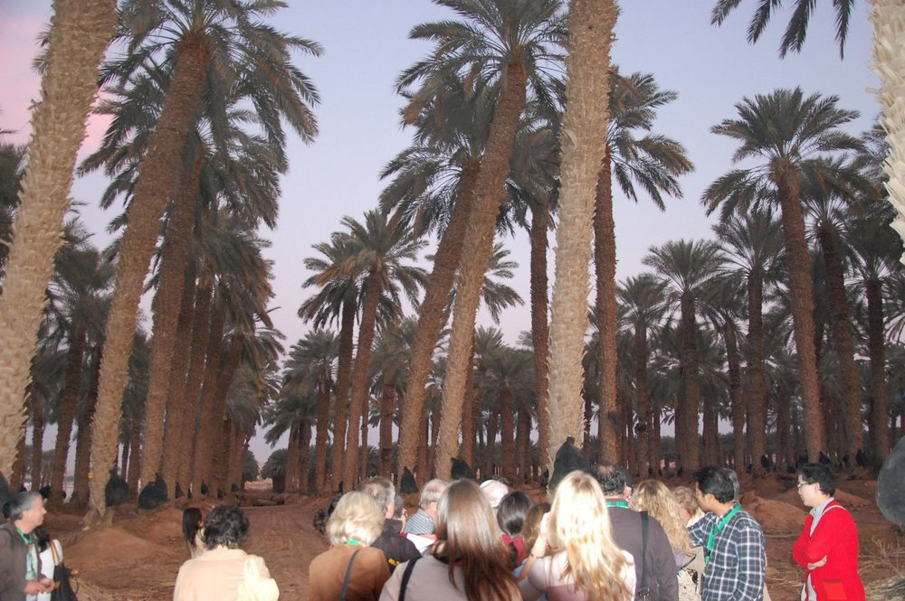 Click photo to download. Caption: Date palms in the Arava. Credit: Barry A. Kaplan.