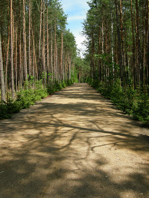 "The ""road to heaven,"" a cynical name Nazis used for the walkway thousands<br />of naked Jews took to the gas chambers at the former Sobibor death camp.<br />Credit: Jacques Lahitte via Wikimedia Commons."
