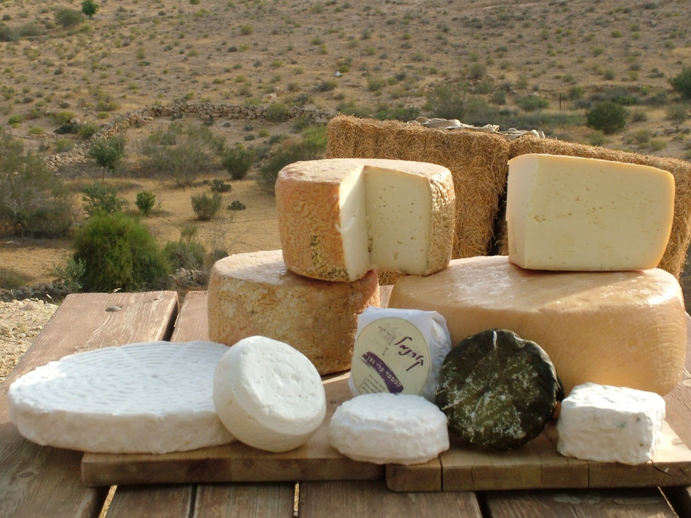 Click photo to download. Caption: An assortment of cheeses pictured at the Kornmehl farm in the Negev. The Kornmehls consider themselves cheese artisans. They make specialty cheeses ranging from brie to camembert at their farm. Credit: Provided photo.