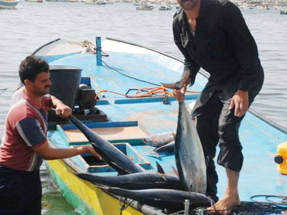 Gaza fishermen. Credit: Flickr