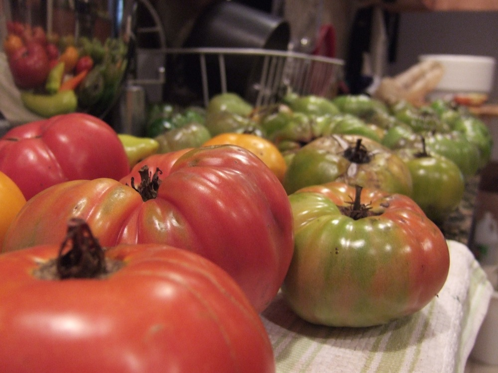 Click photo to download. Caption: Tomatoes at Pushing the Envelope Farm in Geneva, Illinois, pictured during a stop on the Jewish nonprofit Hazon's cross-country bike ride in 2012. Credit: Courtesy of Hazon.