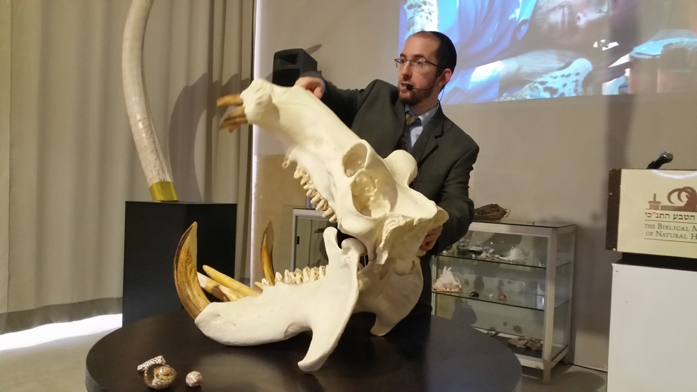 Click photo to download. Caption: Rabbi Natan Slifkin unveils a hippo skull at the Feb. 23 opening of the Biblical Museum of Natural History in Beit Shemesh, Israel. Credit: Orit Arfa.