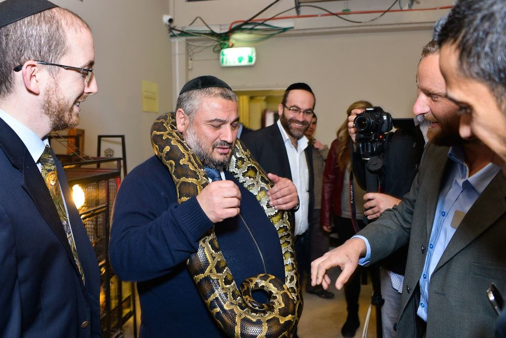 Click photo to download. Caption: Beit Shemesh Mayor Moshe Abutbul with a python at the Feb. 23 opening of the Biblical Museum of Natural History in Beit Shemesh, Israel. Credit: Courtesy Biblical Museum of Natural History.