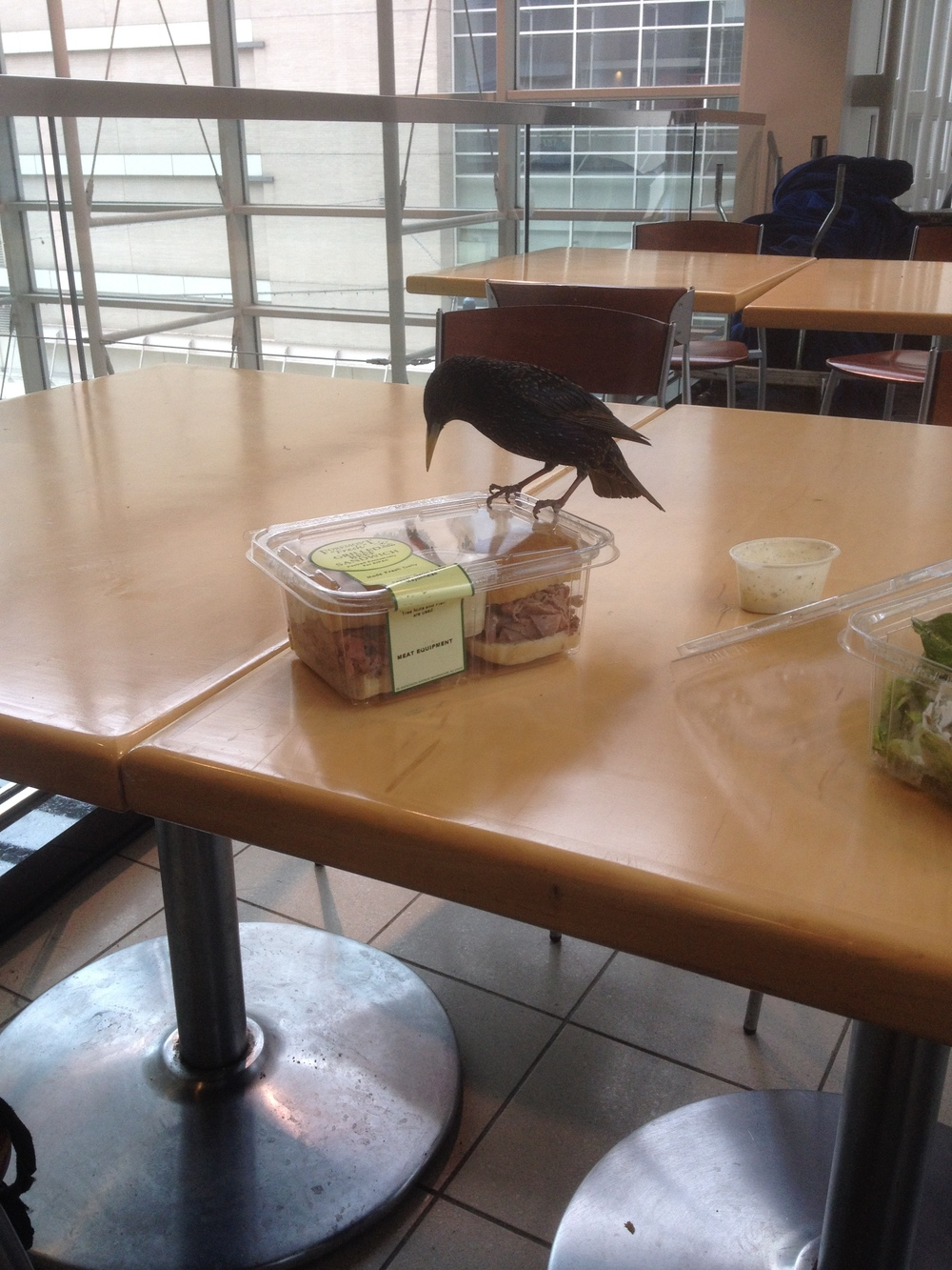 A bird sets its sights on a roast beef sandwich at the AIPAC conference. Credit: Jacob Kamaras.