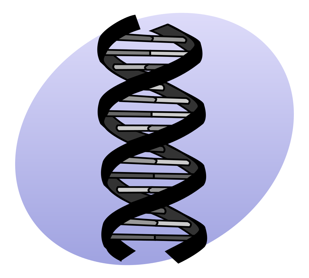 An algorithm developed by Hebrew University and a Boston hospital could help discover potential diseases in genes. (Illustrative.) Credit: Wikimedia Commons.