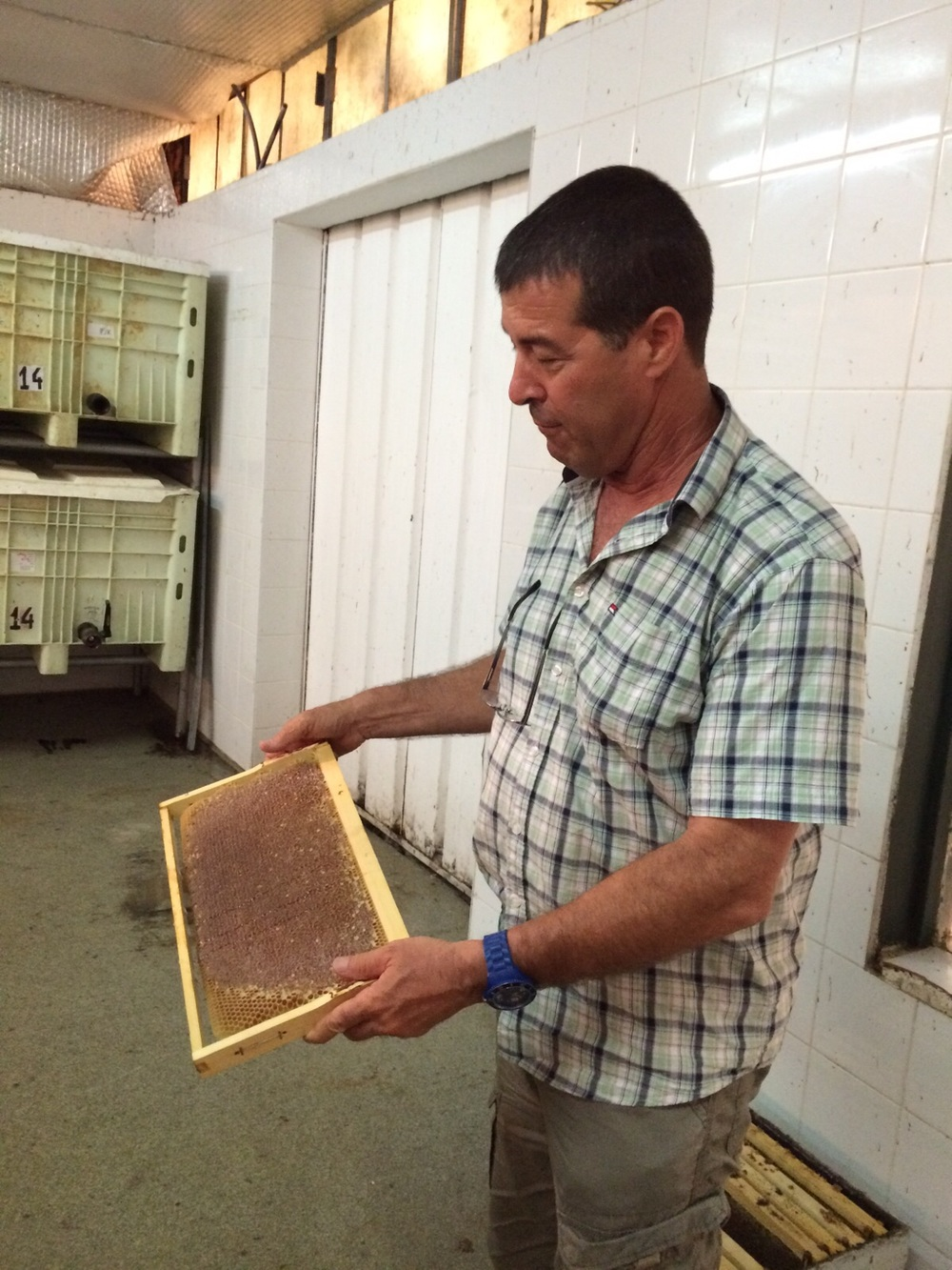 Click photo to download. Caption: Yuval Lin, owner of Lin's Bee Farm in central Israel. Credit: Provided photo.
