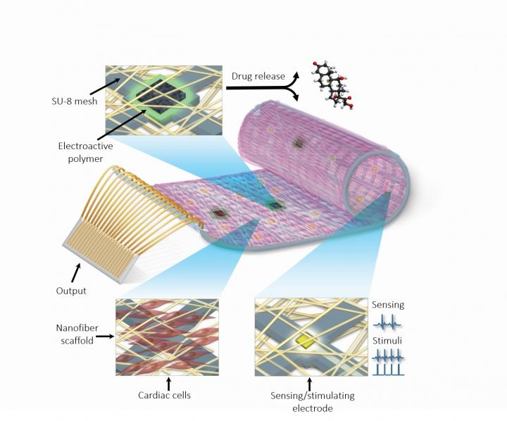 "The remotely-regulated ""cyborg heart patch"" comprised of living cardiac cells, polymers, and a complex nanoelectronic system. Credit: Tel Aviv University via Eurekalert."