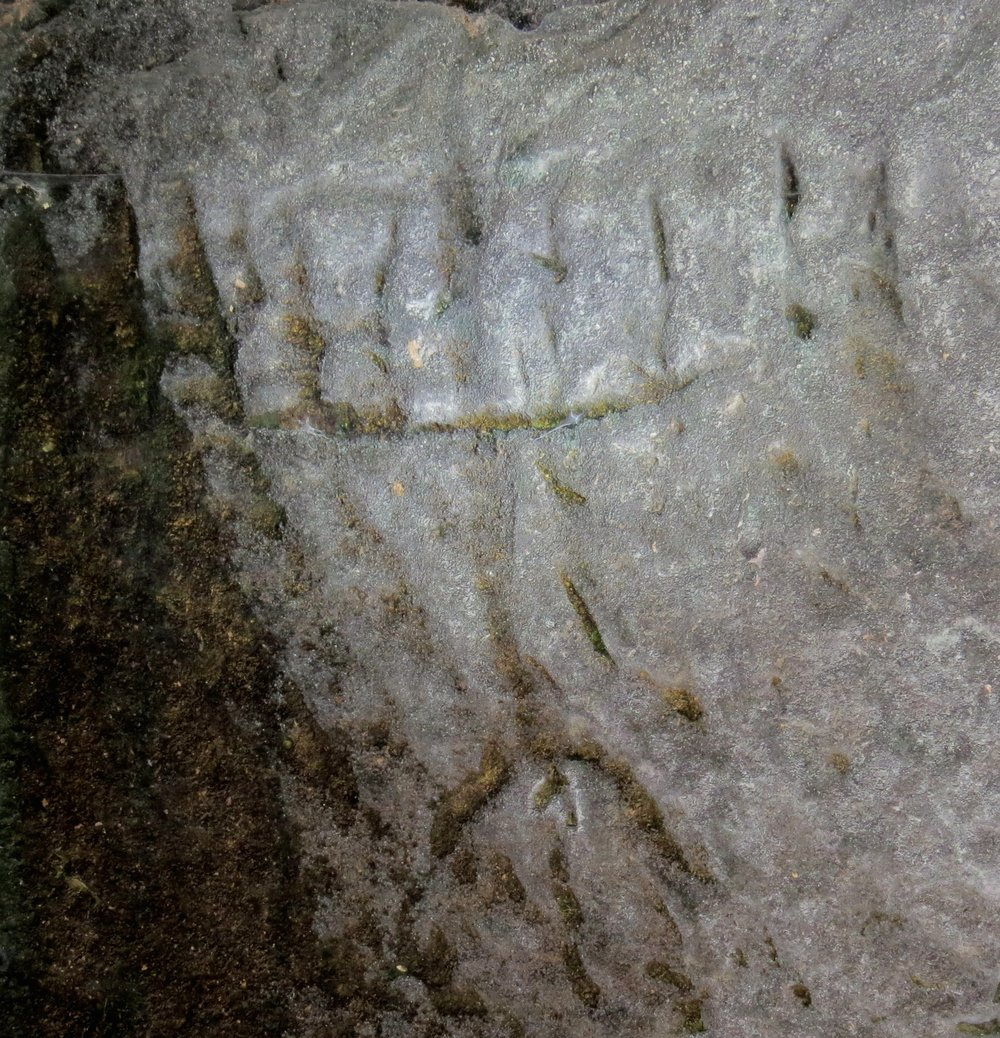 The newly discovered ancient engraving of a menorah in Israel's Judean lowlands. Credit: Israel Antiquities Authority.