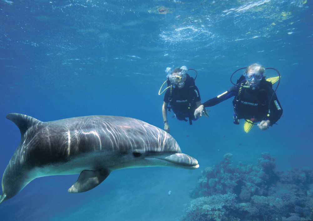 Diving with a dolphin in the Red Sea along the coast of the southern Israeli city of Eilat. Credit: Tony Malkevist/Israeli Ministry of Tourism.