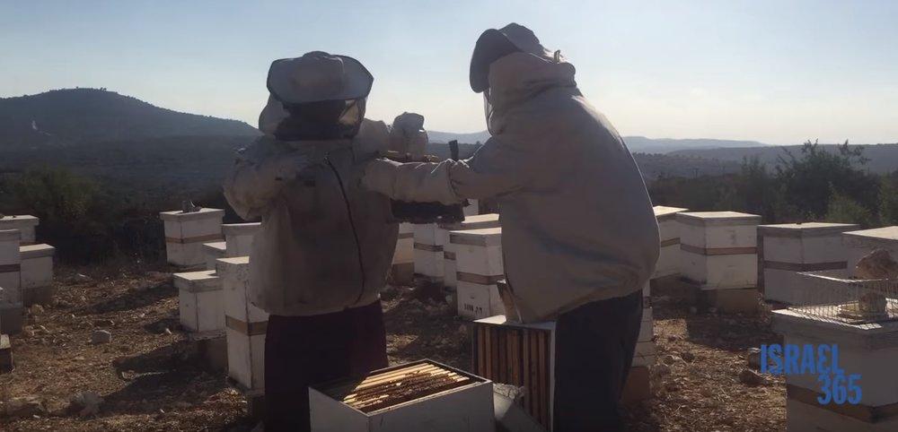 The Dvash Kedumim honey bee farm. Credit: YouTube screenshot.