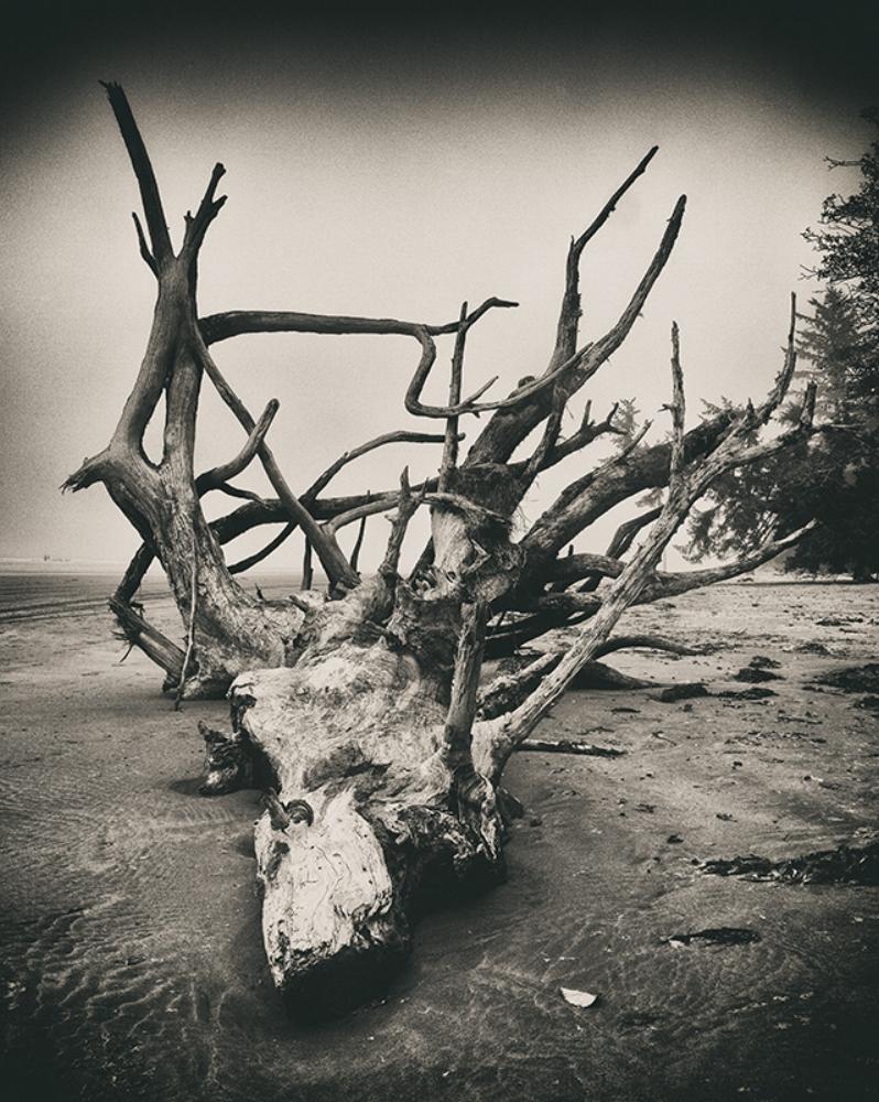 2016_Haida_North Beach.jpg