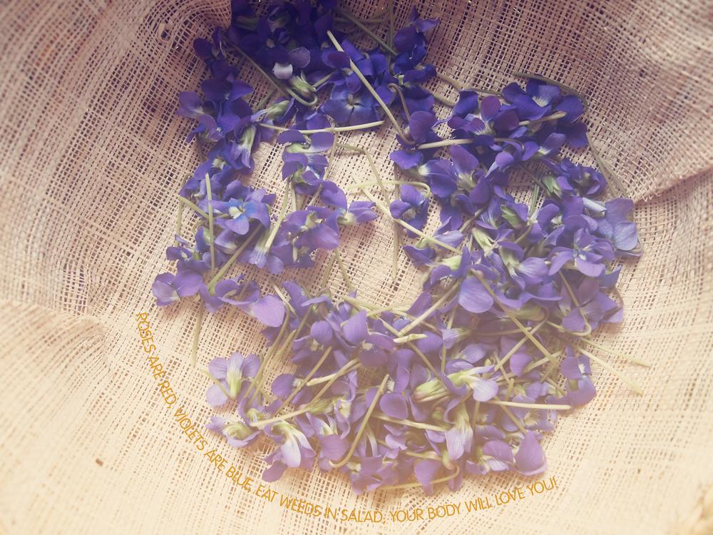 Violet basket.jpg