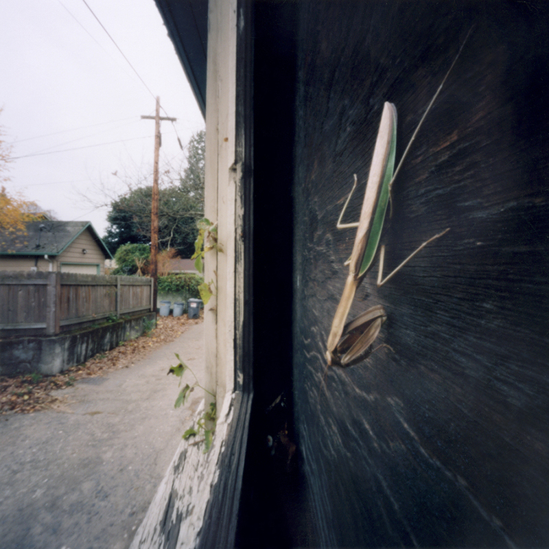 Mantis (as found)
