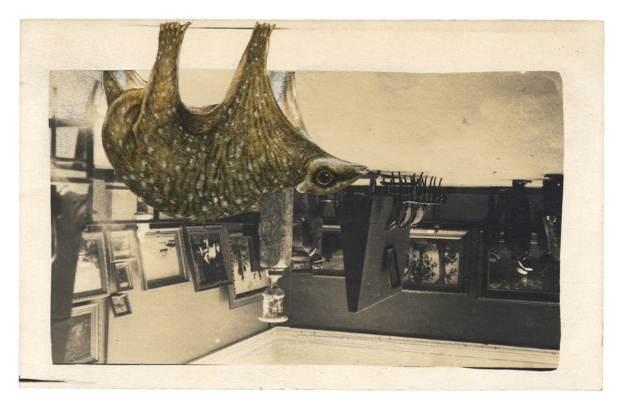 Gracia Haby, The Philippine flying lemur takes a detour pleasing, 2013, postcard collage (to be exhibited as part of All Breathing in Heaven at Geelong Gallery from August, 2013)