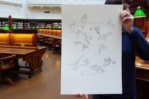 RECENT ARTIST'S BOOK: A Year of Southern Hemisphere Birds