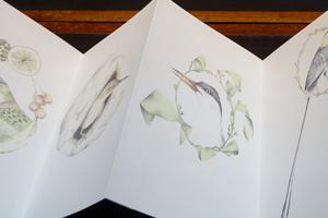 RECENT ARTISTS' BOOK: A Flight of Twelve Southern Hemisphere Birds