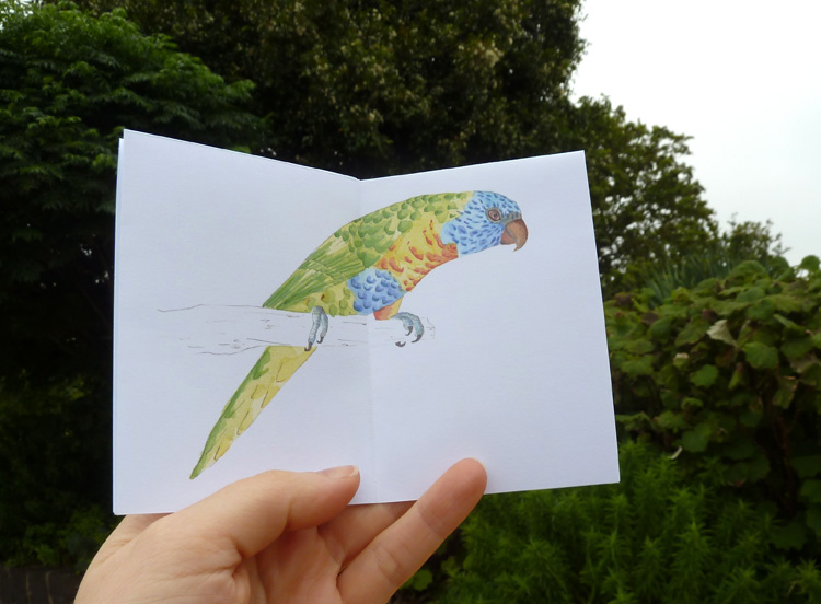 Louise Jennison, Four Rainbow Lorikeets (Trichoglossus haematodus) who visited my garden one summer's day, 2014, zine