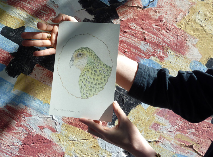 Louise Jennison, Kakapo (from the artists' book A Flight of Twelve Southern Hemisphere Birds), 2013, hand-coloured print
