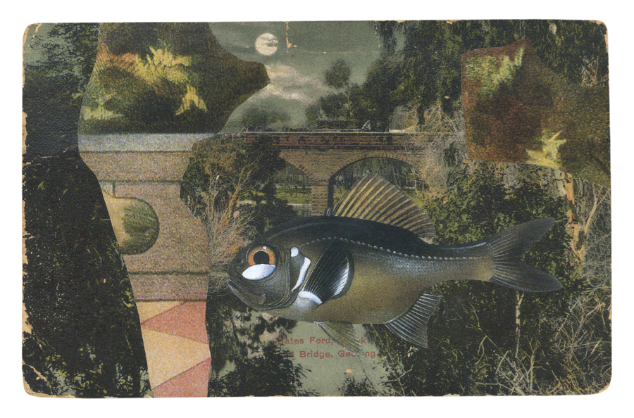 Gracia Haby, With Lantern-eye by moonlight (Photoblepharon palpebratus), 2014, postcard collage