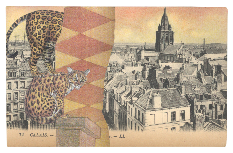 Gracia & Louise,  Concealment in Calais sought (II) , 2014, postcard collage with a Leopard Cat ( Felis bengalenis ) and a Jaguar ( Panthera onca )
