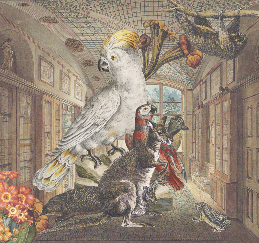 Gracia Haby & Louise Jennison,  Underneath Soane's 'star-fish' ceiling, the library at No. 12 proved anything but quiet , 2015, collage for the cover of the La Trobe Journal (No 95, March 2015)