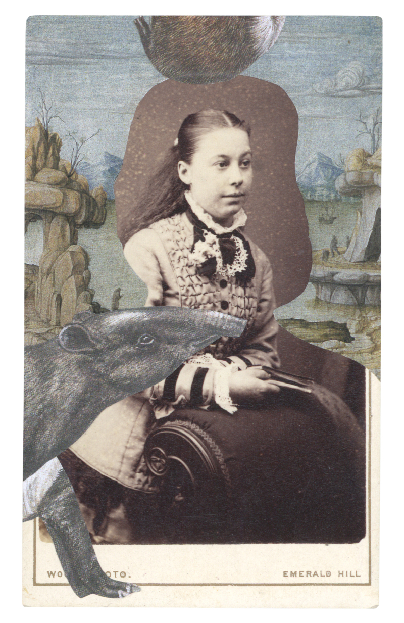 Gracia Haby, Within Francesco del Cossa's Portrait of a Young Man, c 1472–74, with a Malayan tapir (Tapirus indicus), 2015, collage on carte de visite