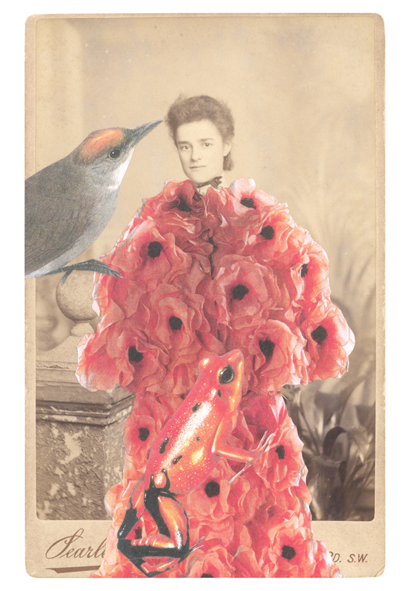 NEW PORTRAIT GREETING CARD In a borrowed costume of silk organza poppies, designed by Arnold Scaasi, 1983,  accompanied by a critically endangered Golden arrow-poison frog (Atelopus zeteki)