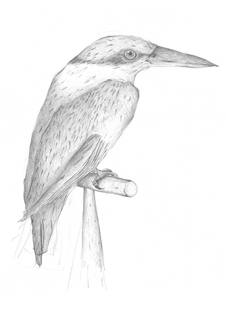 Louise Jennison, Kingfisher, 2010, drawing