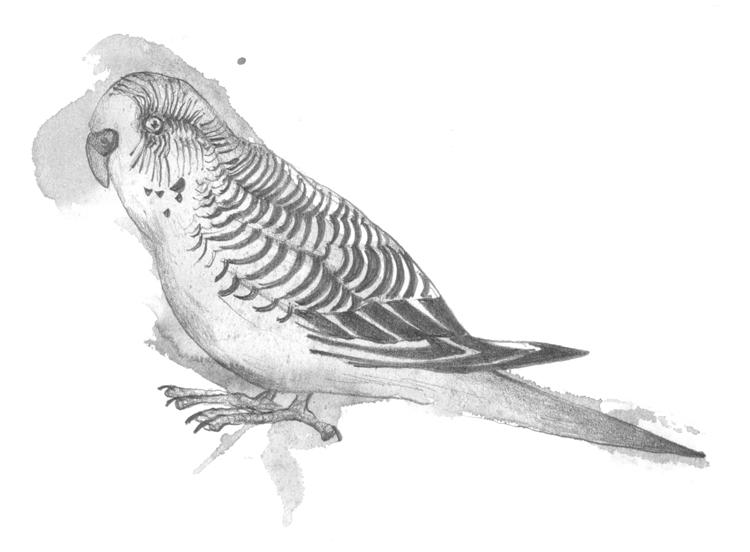 Parrots_LouiseJennison01.jpg