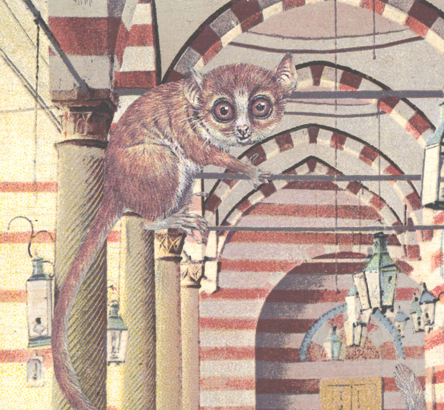 A Rufous mouse lemur (Microcebus rufus) collage from our artists' book, Because I Like You, 2016