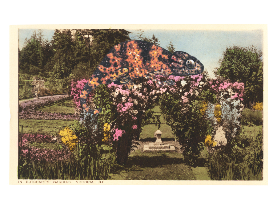 Gracia Haby,  Butchart's Garden held a surprise for the unsuspecting , 2012, postcard collage